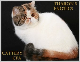 cattery persians and exotic